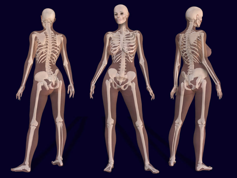 The Skeletal System Image courtesy Bernhard Ungerer