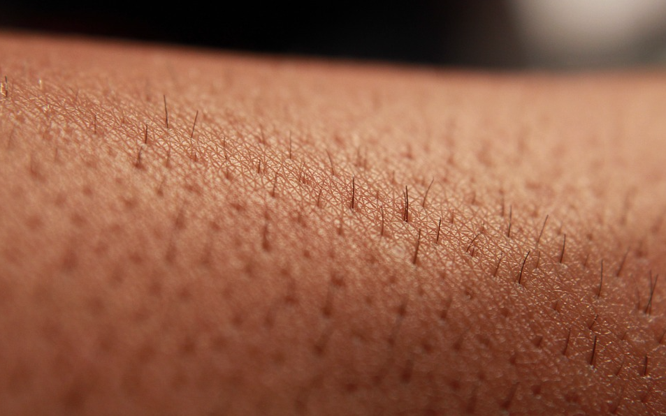 skin hair nails glands