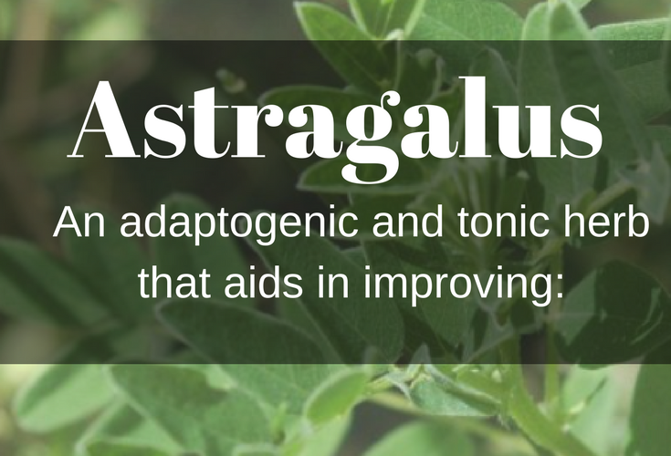 Astragalus - adaptogenic and tonic