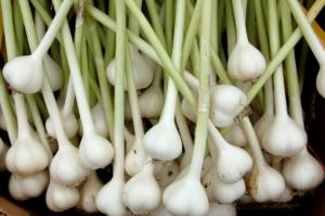 Does Garlic Help Metabolic Syndrome?